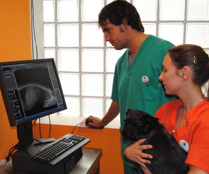 Diagnóstico por imagen: Hospital Veterinario  de Hospital Veterinario Nacho Menes