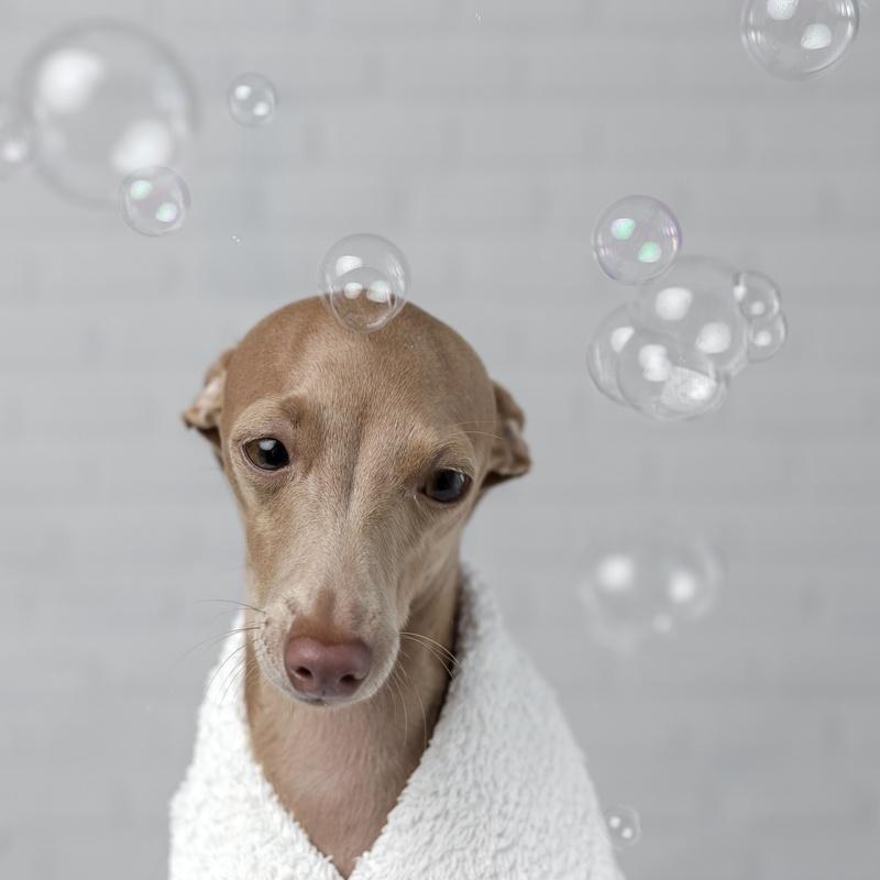 Spa y ozonoterapia: Servicios de Dogmopolitan