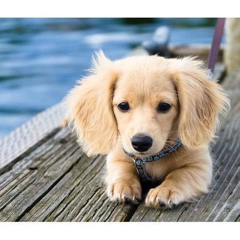 Peluquería canina y felina: Servicios de Gos i Gat clínica veterinària sl