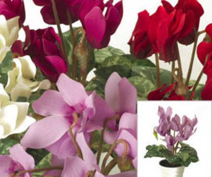 Maceta Cyclamen