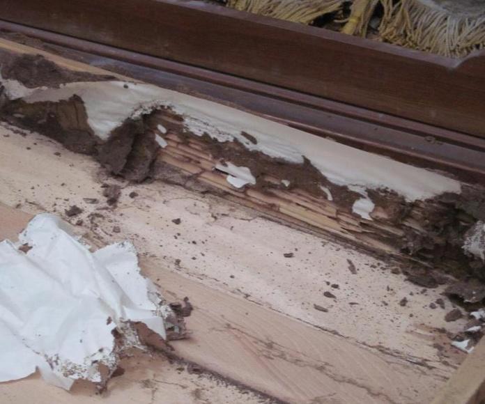 Interior armario ataque termitas