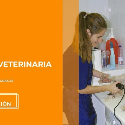 Veterinarios en Móstoles | Huellas Clínica Veterinaria