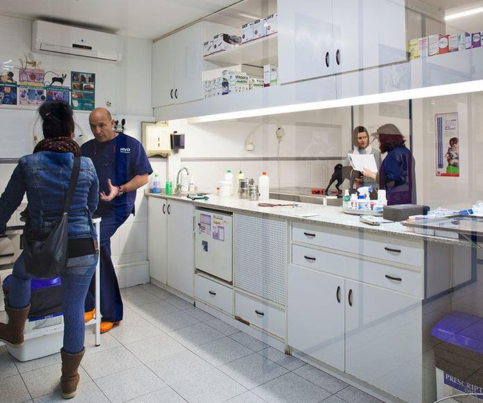 Etología: Especialidades de Hospital Veterinario Desvern