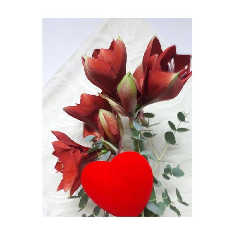 San Valentín, día de la madre: Catálogo de Flores Maranta