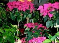 Envío de flores a domicilio en Rivas Vaciamadrid para cualquier evento