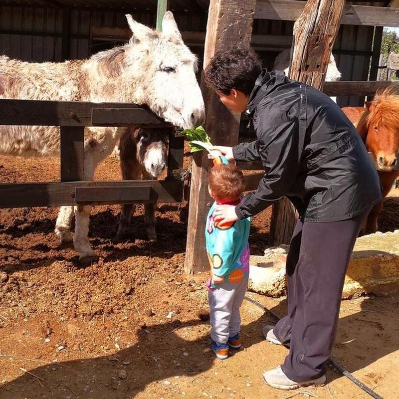 Excursiones: Centro Infantil Pompitas de Centro Infantil Pompitas