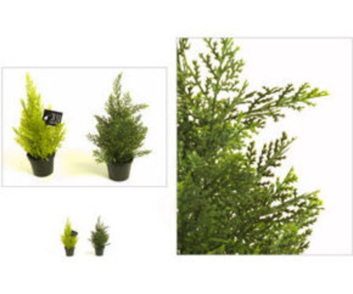 Ciprés 32cm Cedar