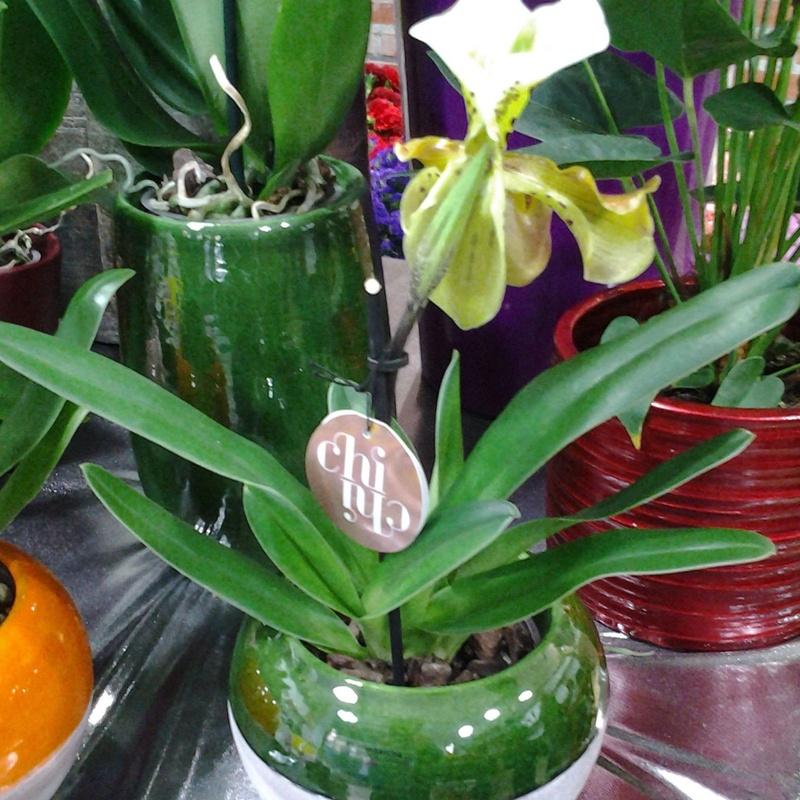 Paphiopedilum: Servicios de Arte Flor