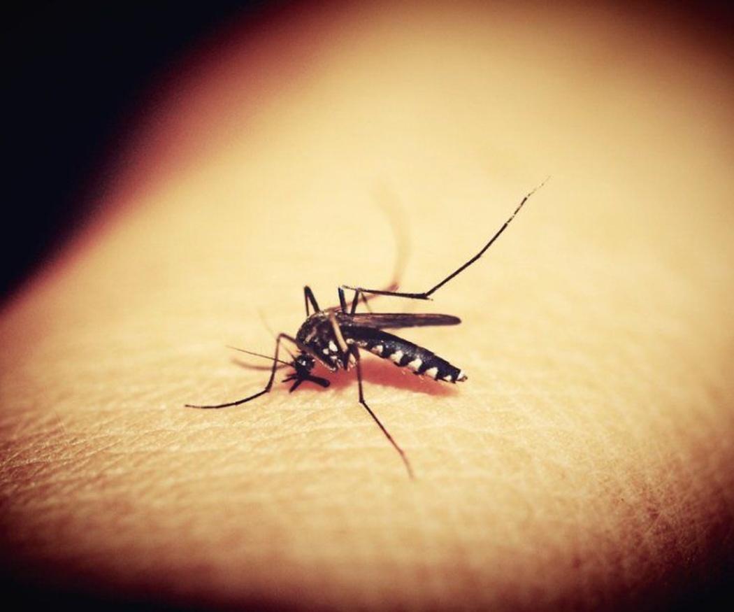 La incomodidad y los peligros de los mosquitos