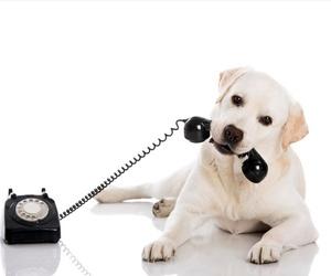 Todos los productos y servicios de Especialistas en perros y gatos: Huellas Centro Veterinario