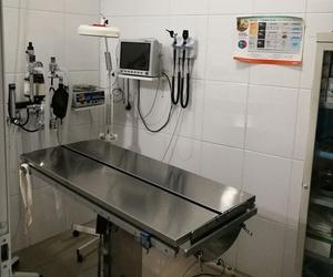Clínica veterinaria especializada en cirugía en Priego de Córdoba