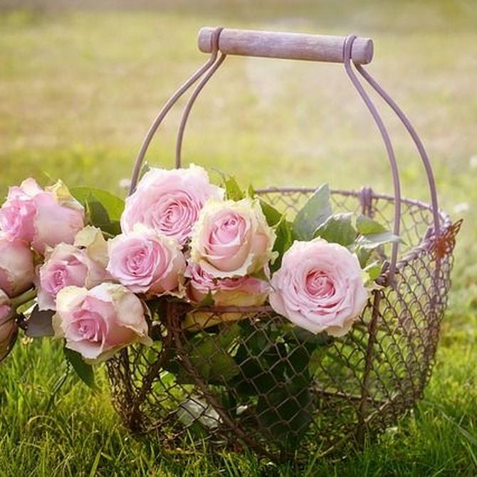 ¿Cómo mantener un jardín cuidado durante todo el año?
