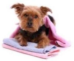 Cuidados del pelo del perro en invierno