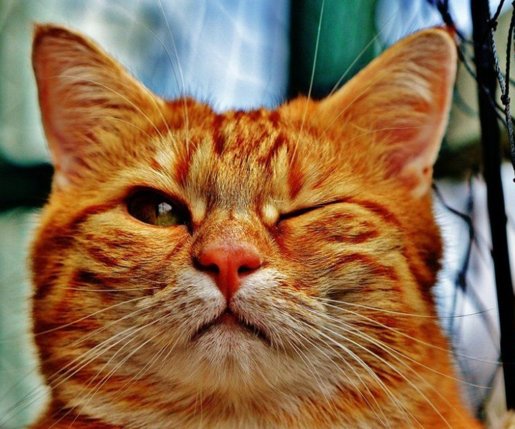 El éxito de los vídeos de gatos en Internet