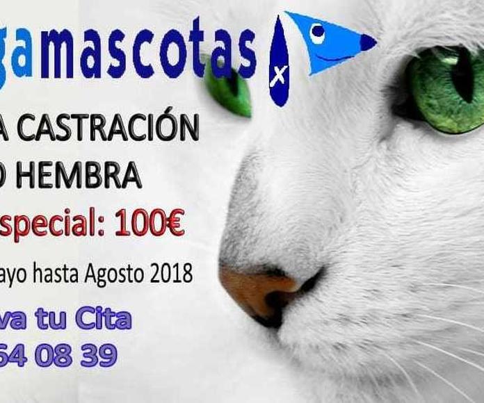 Castración de gatos En Murcia
