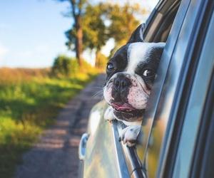 Las vacaciones y tus mascotas no son incompatibles