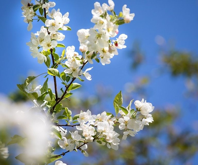 Mantenimiento de árboles, plantas y césped: Servicios de Futurgrass