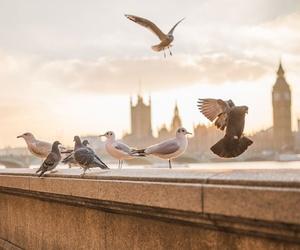 Eliminación de plagas de palomas en Murcia