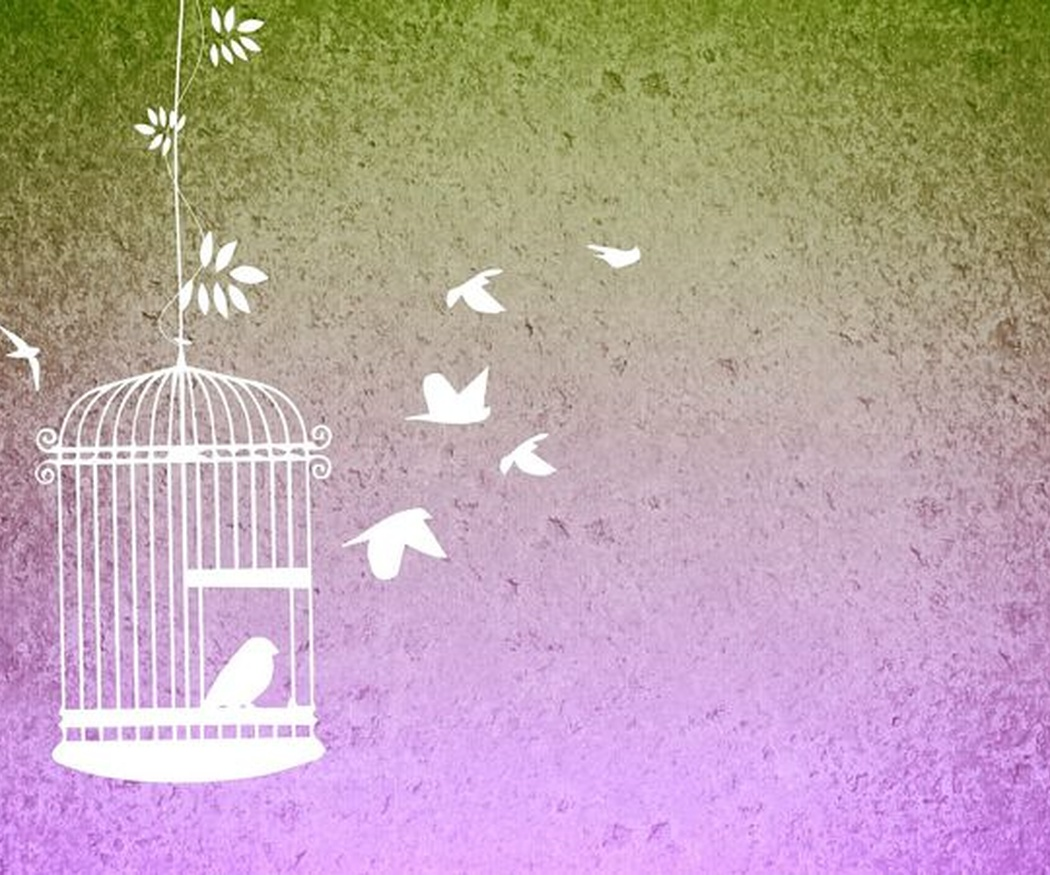 ¿En qué debes fijarte si voy a poner un pájaro en tu vida?