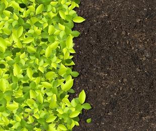 Venta de fertilizantes