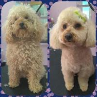 Tienda y peluquería canina en Alcobendas