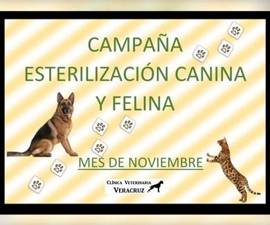 Campaña de esterilización canina y felina en Madrid