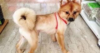 Peluquería canina con servicio a domicilio Llagostera