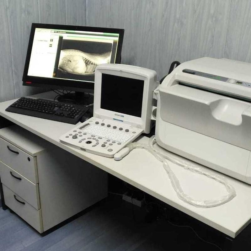 Diagnóstico: aparatología de última generación: Servicios de Veterinario Alcorcón