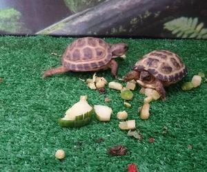Tienda de animales exóticos en Fuerteventura