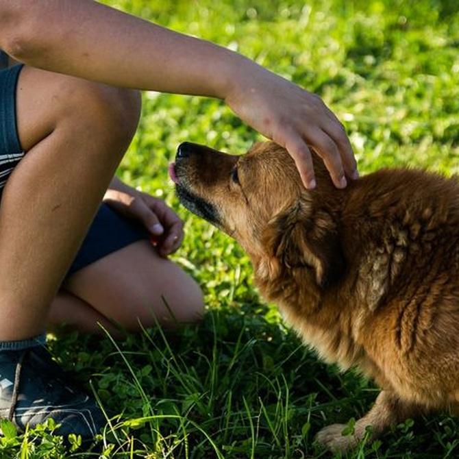 Mantén a tu mascota libre de parásitos