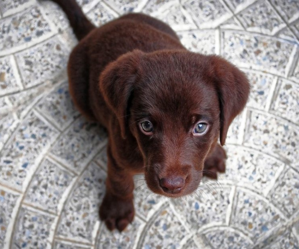 Consejos para la alimentación de tu cachorro