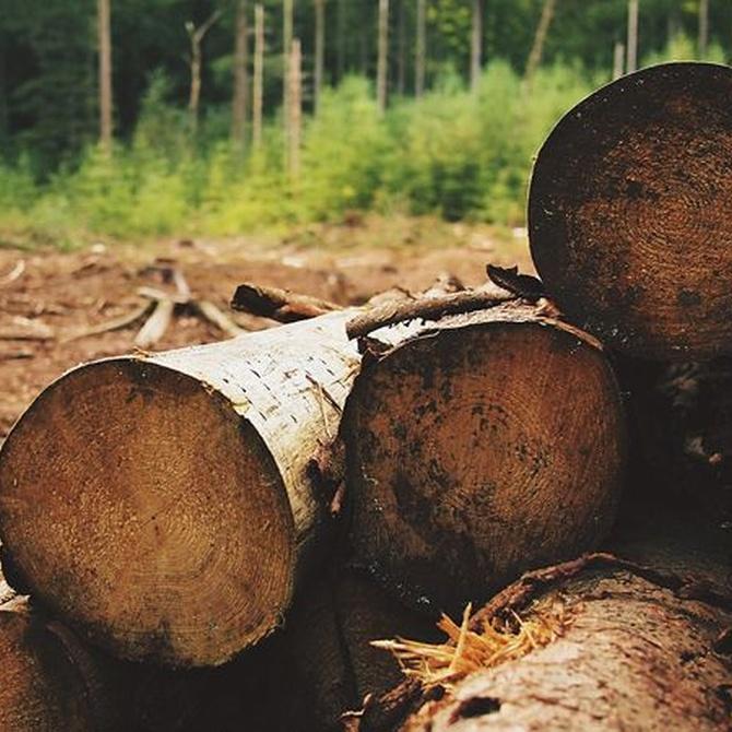 Las mejores maderas para su uso en exteriores