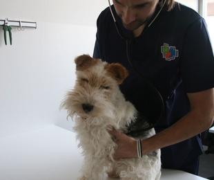 Medicina interna canina