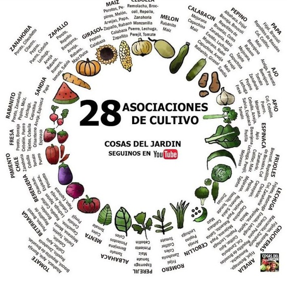 Cómo es la asociación de cultivos