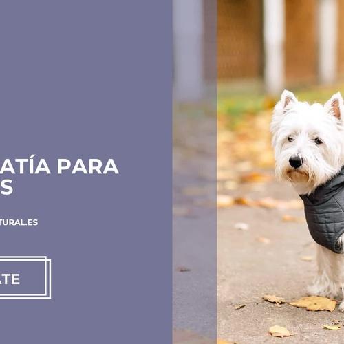 Acupuntura en animales en Moratalaz, Madrid | Vetsana