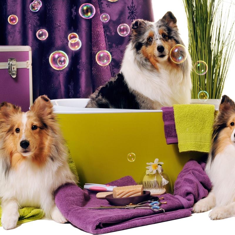 Baño y arreglo higiénico: Servicios de Peludetes de Carmen