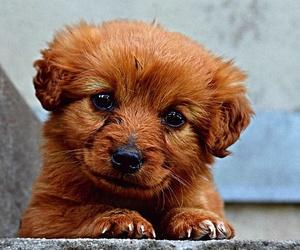 ¿Cómo afecta el parvovirus a mi cachorro?