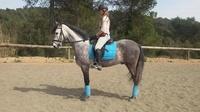 Clases de perfeccionamiento con caballos propios. Preparando para competir.
