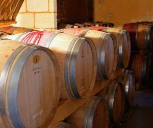 Sector vinícola