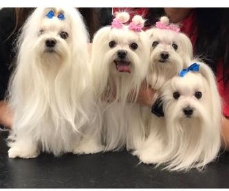Higiene: Productos y servicios de Academia de Estética Canina Woof Meow