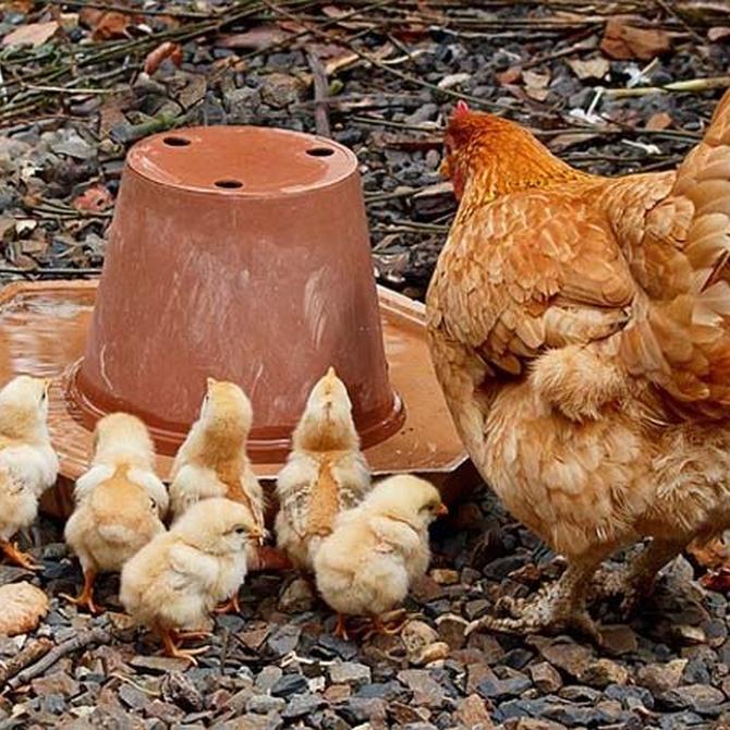Ahora en serio... ¿Qué fue primero, el huevo o la gallina?