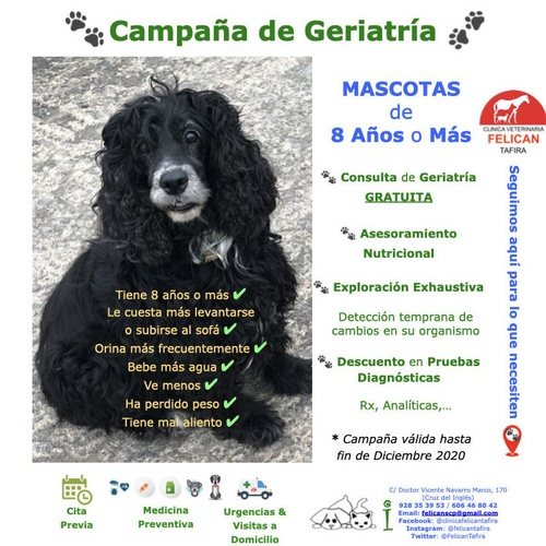 Campaña de Geriatría - Consulta de Geriatría GRATUITA Ss TU MASCOTA tiene 8 Años o Más