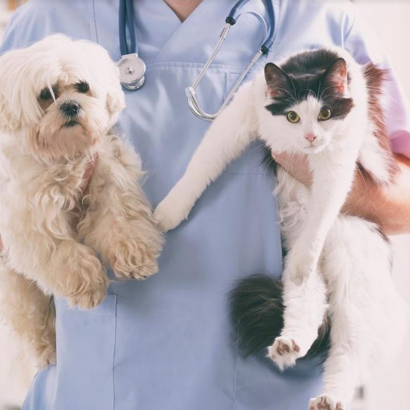Otras consultas: Servicios especializados de Clínica Veterinaria Rosvet