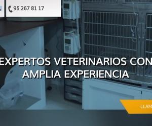 Clínica veterinaria en Melilla | Clínica Veterinaria Pintos C.B
