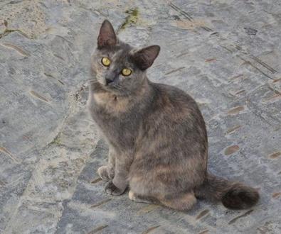 Diez alimentos prohibidos para los gatos (II)