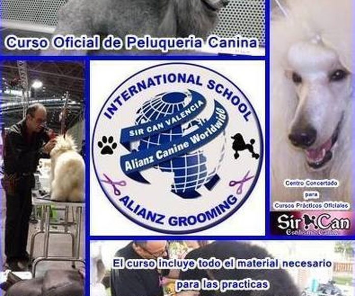 Curso Oficial de peluquería canina