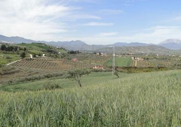 Coín – Terreno Rustico / Ref.- ID-R2639570