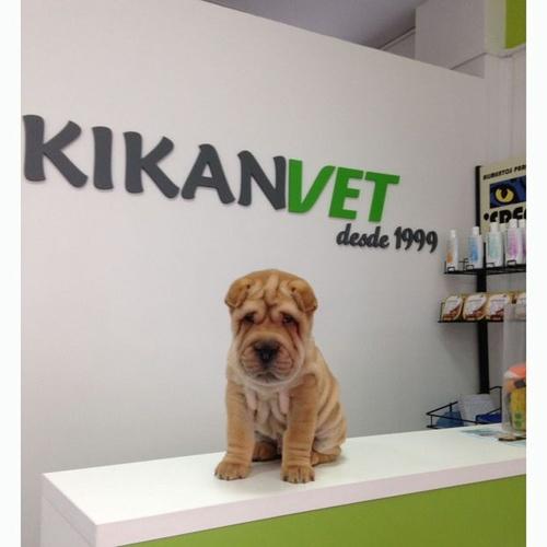 Atención veterinaria para tu mascota