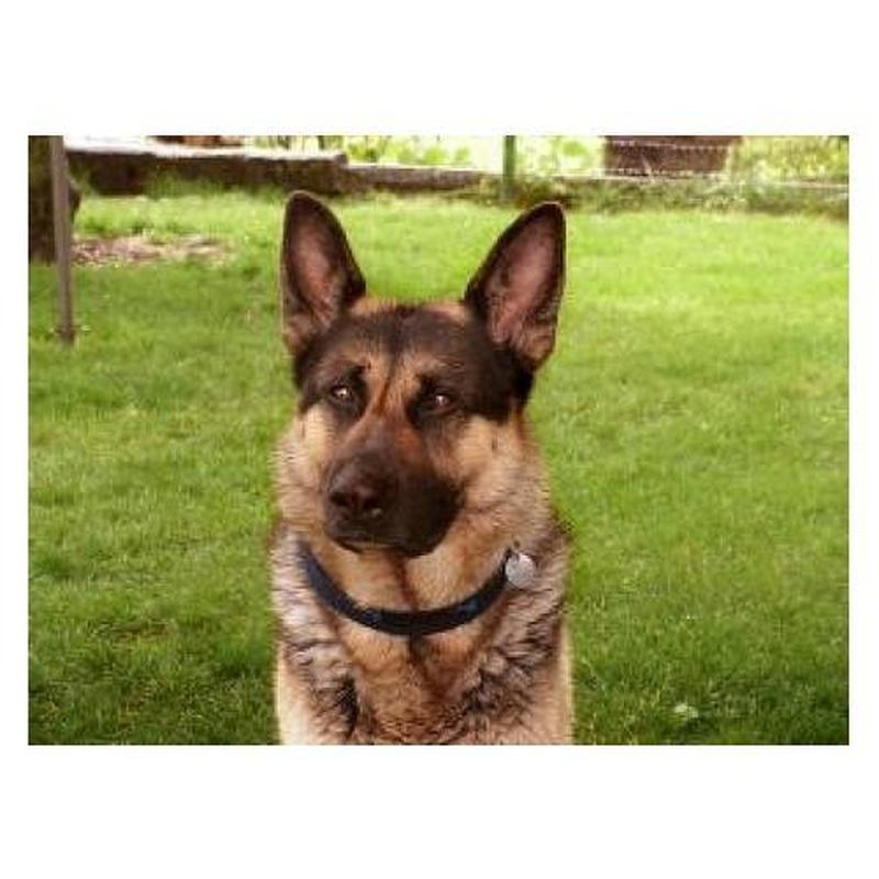Tenencia de animales potencialmente peligrosos: Servicios de Medipsico, S.L.