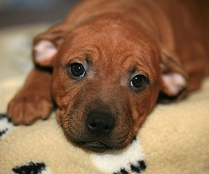 La ciencia en la mirada de nuestros cachorros